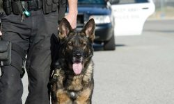 New Explosive-Detecting K-9 Joins Penn State Police