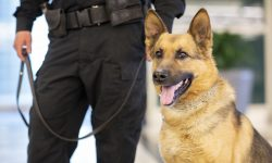 Tacoma Hospital Brings in K-9 to Prevent Assaults, Help Sick Patients