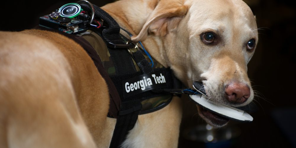How Man's Best Friend Could One Day Trigger Alarms and Emergency Alerts