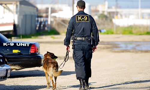 A K9 Nose Best: How to Deploy a K9 Team on Your Campus
