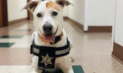 Read: University of Illinois Police Comfort K9s Make a Huge Impact